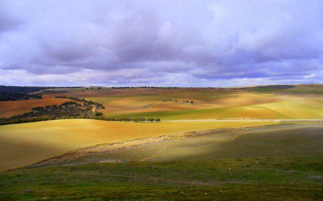 Castilla-La Mancha fields
