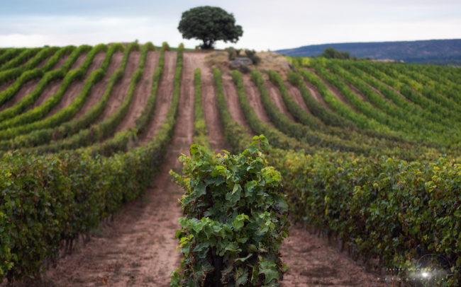La Rioja wine fields